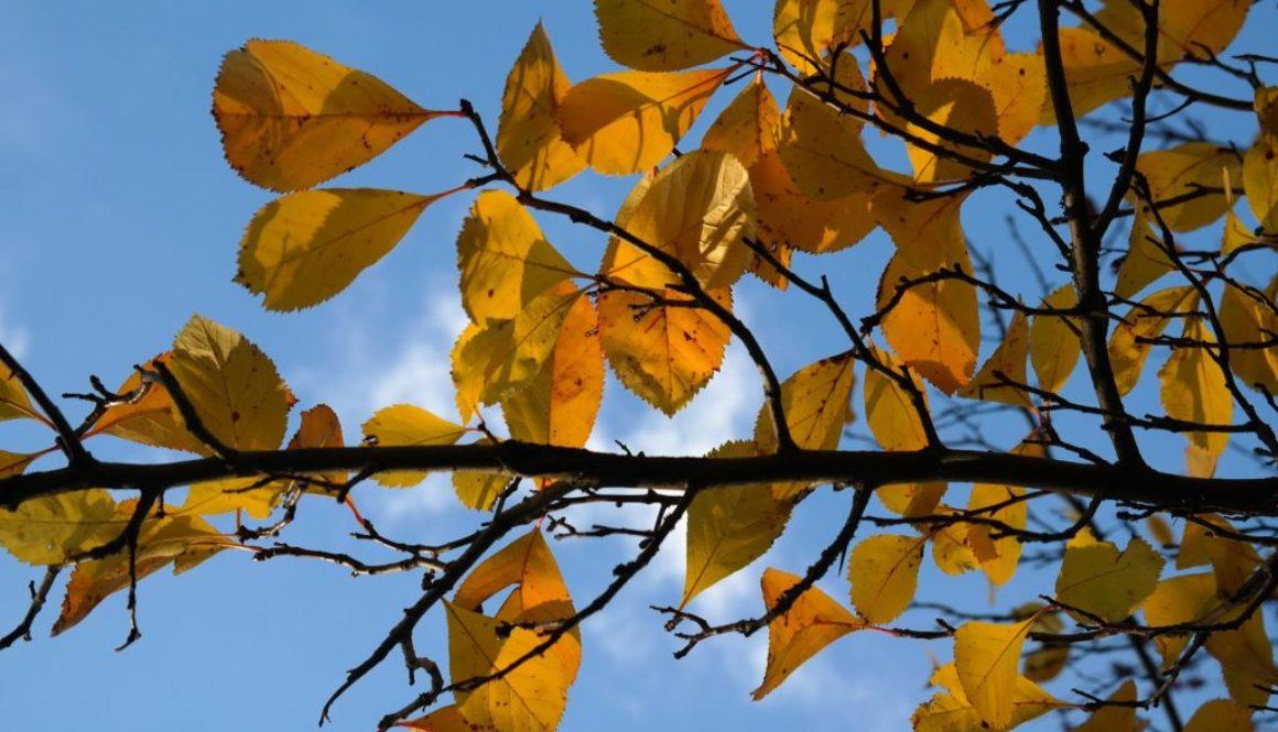 leaves-gab7bda4f4_1920