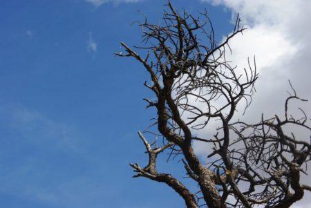 tree-gaa682154a_1280